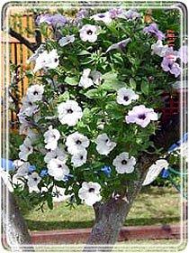 Фото декоративных растений