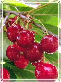 Фото плодовых