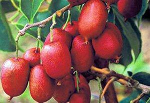 Купить плодовые саженцы в питомнике