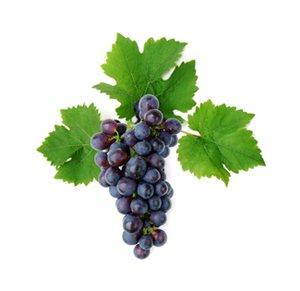 Продажа саженцев винограда